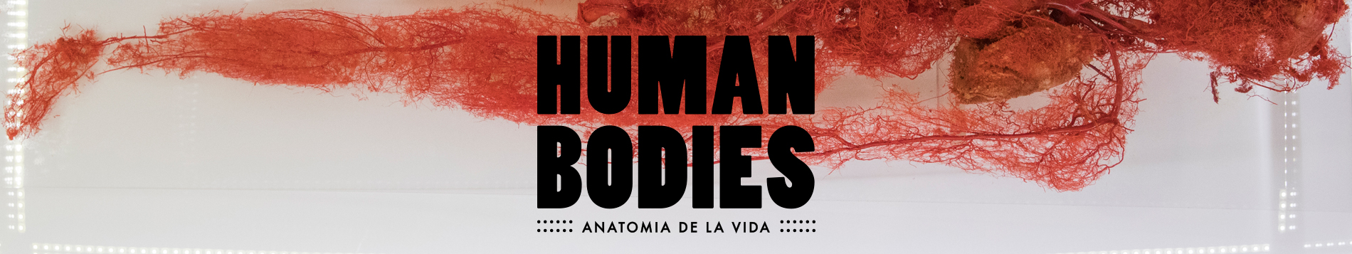 Human Bodies en Barcelona