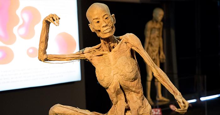 Human Bodies - Esqueleto
