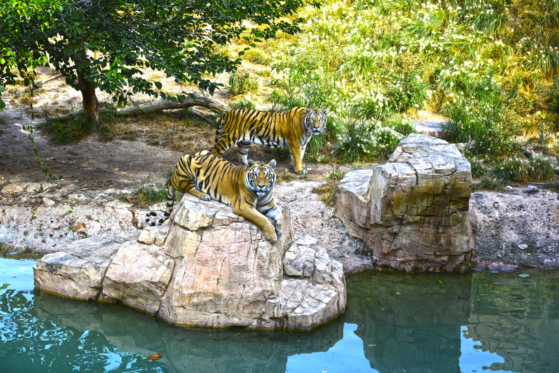 Terra Natura Benidorm - Tigres